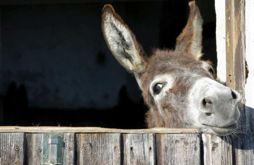 Meet the farm animals at eco-friendly resort Domaine du Val, northern France