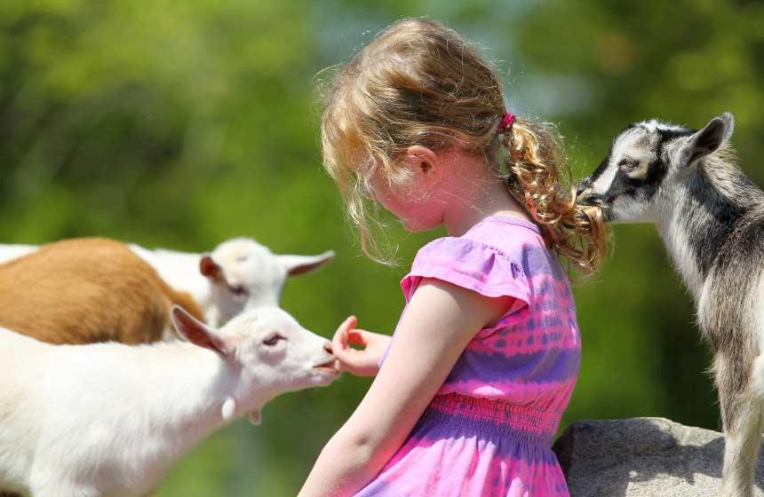 Children will enjoy helping to feed the animals near Villa des Groseilliers gite