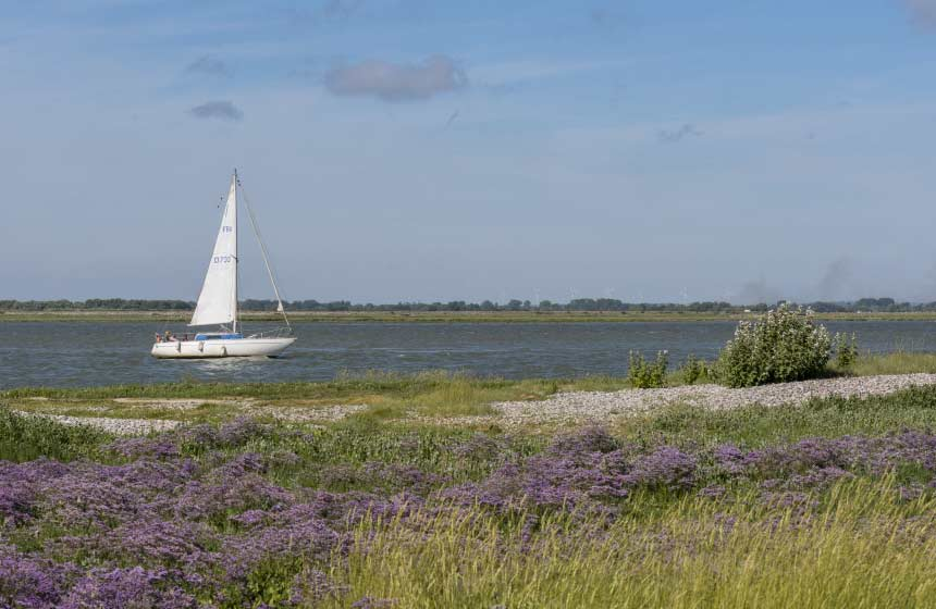A walk amongst the sea lavender at Cap Hornu, just around the bay from Saint-Valery-sur-Somme