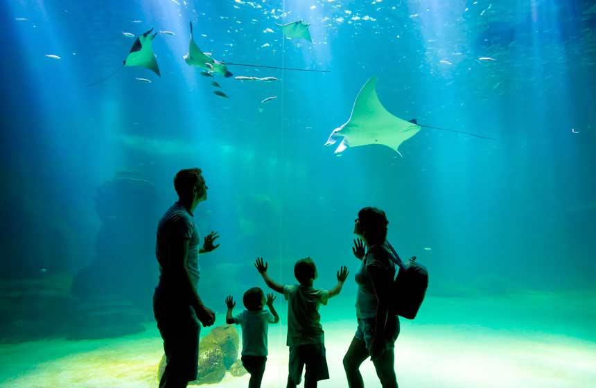 Nausicaa, Europe's largest aquarium