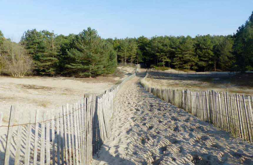 Pathway to paradise! Le Touquet's seascape emerges from the pine tree forest