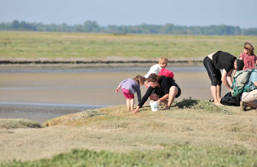 Foraging for samphire on an organised walk across the bay is a unique thing to do on your family weekend break in Northern France
