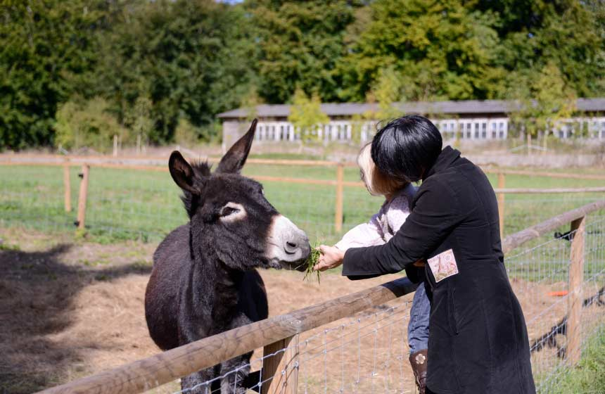 The children will be delighted to meet the animals on your family treehouse holiday in France