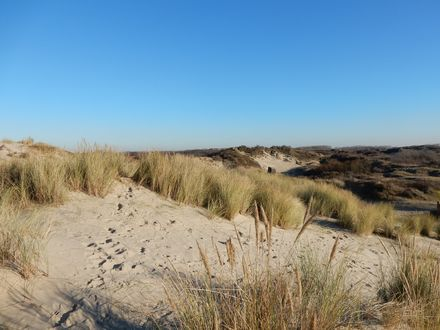 The dunes around Bray-Dunes