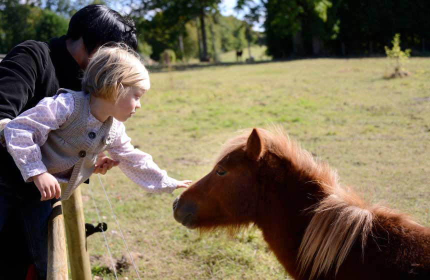 The children will love meeting the ponies at Chateau des Tilleuls