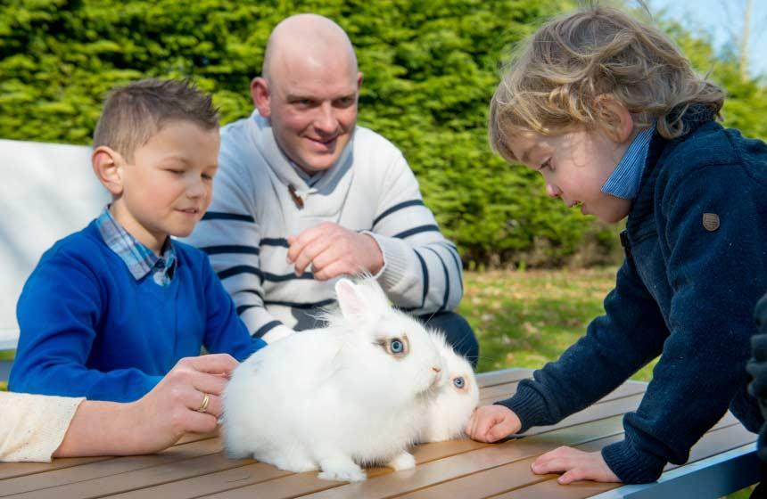 Le Domaine des Célestins - Rabbit - Bernay en Ponthieu