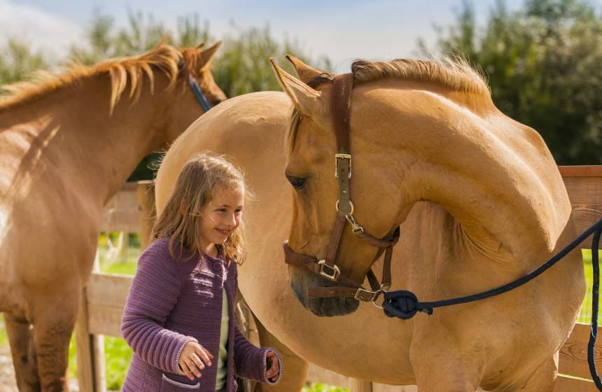 The Somme bay in Northern France is home to the famous Henson breed of horse. Meet them at Saint-Quentin-en-Tourmont