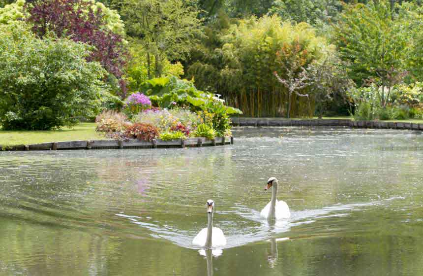 At the heart of the Hortillonnages floating gardens, serene swans inhabit the peaceful waters near your Amiens holiday cottage