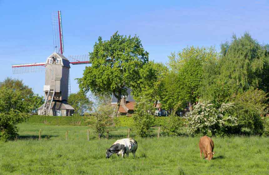 Windmills, the giants of the Flemish countryside