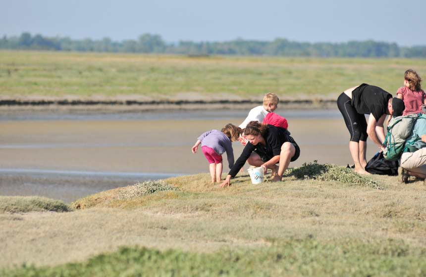 Foraging in the Somme Bay, you'll find all sorts of creatures and plants
