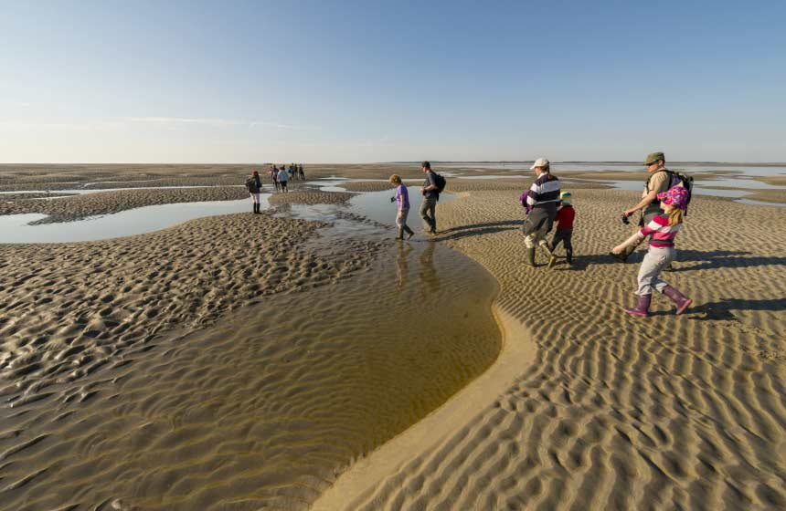 An organised walk across the Somme bay is a must on your family weekend break in Northern France