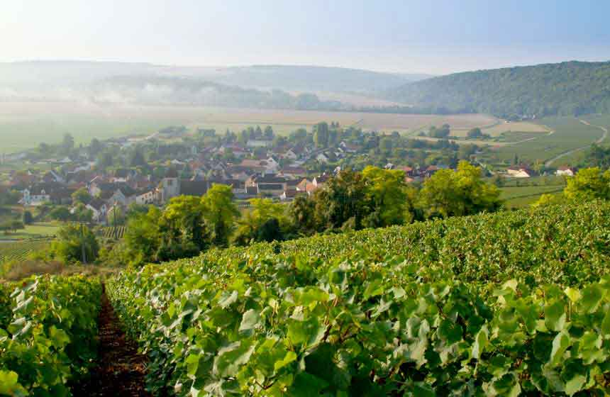 On your champagne break in Northern France, explore the champagne vineyards