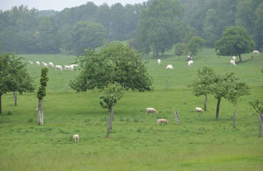 The garden at Villa des Groseilliers gite is home to a flock of sheep in a beautiful countryside setting