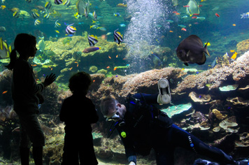Nausicaa, Europe's largest aquarium, reopens in even bigger and better form on 19 May 2018 - Visit France