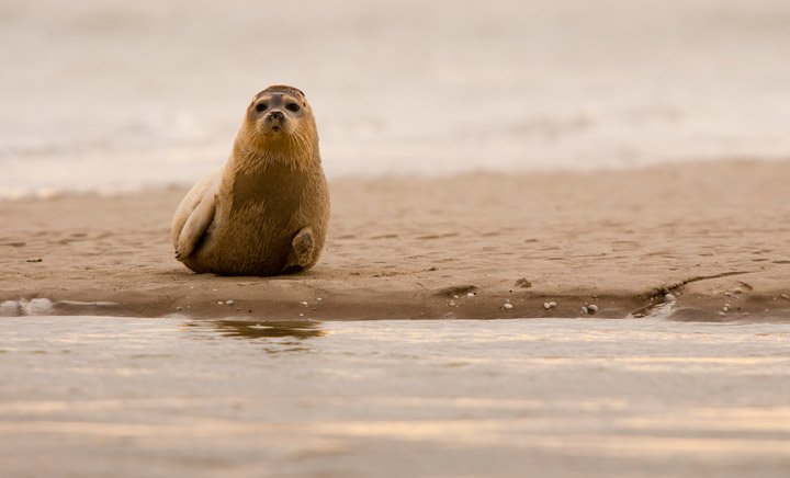 Northern France's coastline is filled with wildlife such as its colony of seals