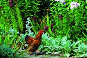 Chicken Jardin de Maizicourt