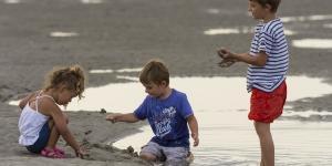 Animals hidden in the sand