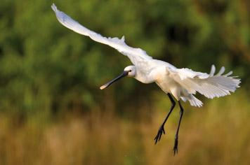 marquenterre bird reserve - French Weekend Breaks