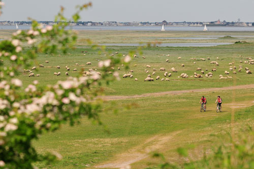 Cycling in the Somme Bay